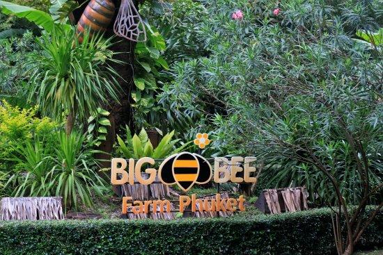 big-bee-farm